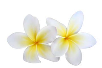 Spoed Fotobehang Frangipani two isolated frangipanis