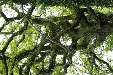a tangled tree