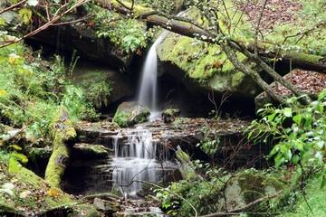 Fototapete - water spring