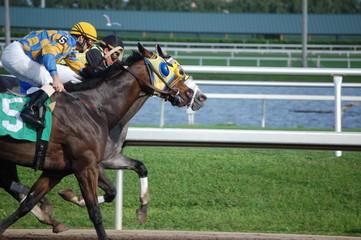 racing at gulfstream