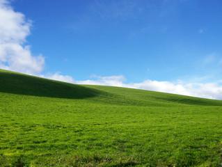 grüne wiese vor blauem himmel