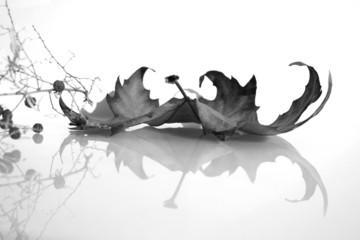 composition végétale en noir et blanc