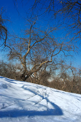 ski walk in park at a clear sunny winter day