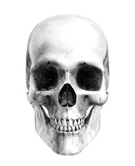 human skull - front - pencil drawing style