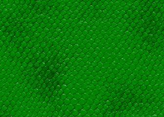 schlange haut snake skin