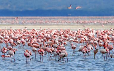 Foto op Canvas Flamingo flamingos on lake