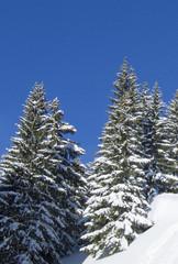 neige037