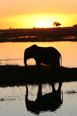 eléphant au coucher du soleil