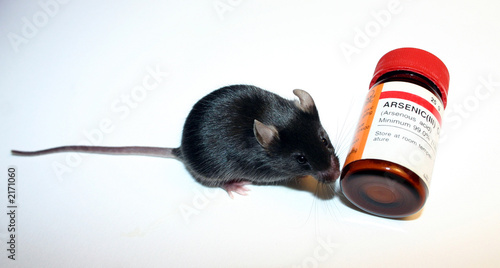 souris et poison photo libre de droits sur la banque d 39 images image 2171060. Black Bedroom Furniture Sets. Home Design Ideas