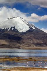 vulcano in park lauca