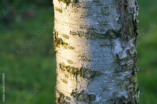 Tronc d 39 arbre en gros plan avec corce photo libre de droits sur la banque d 39 images fotolia - Achat tronc arbre decoratif ...