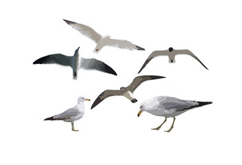 six gulls