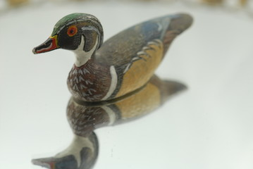 wood duck on mirror