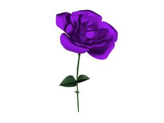 rose fleur violette