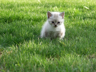baby cat starring in grass
