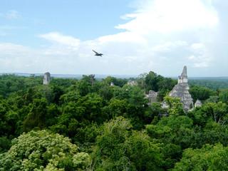 temples mayas de tikal