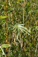 palm grass leaf