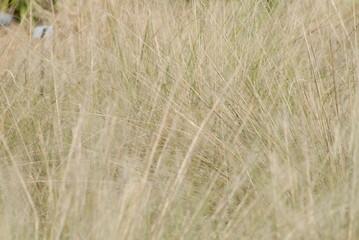 fine grass texture