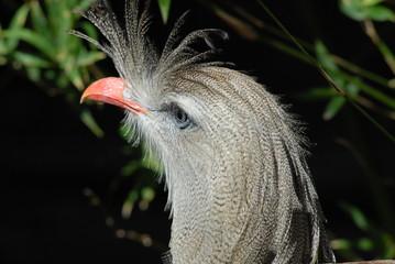 crested eagle head