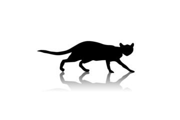 cat black illustration