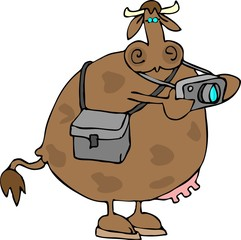 cow photographer