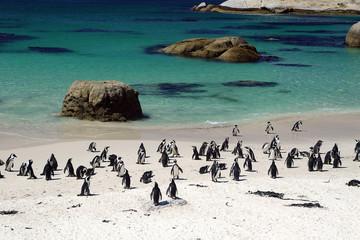 pinguinkolonie_001