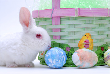 cute bunny and basket