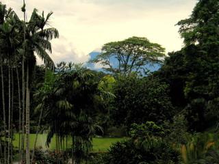 Jardín botánico de Bogor en Jakarta ( Indonesia, Asia)