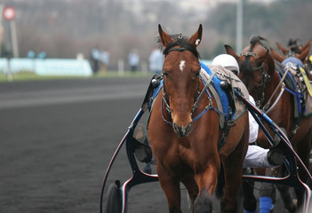 horses in vincennes, france