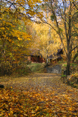 house in a forest - autumn landscape