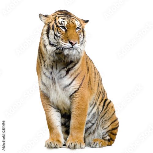 Tigre assis sur son socle photo libre de droits sur la - Images tigres gratuites ...