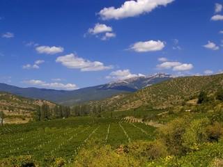 vineyard mountain