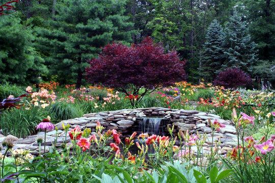 daylily pond