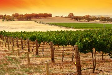 Fototapete - barossa vineyard sunset