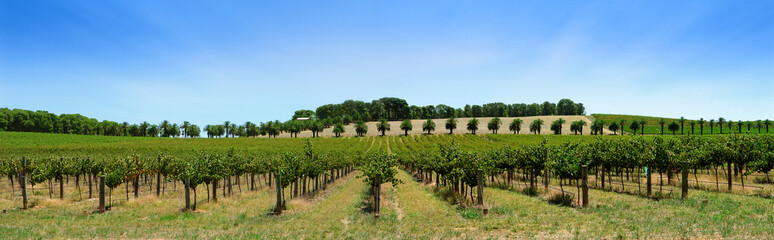 Wall Mural - vineyard panorama