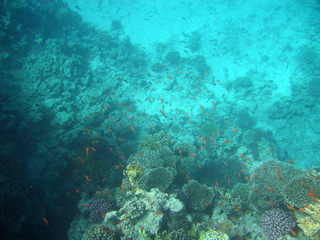 red-sea39