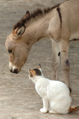 donkey with cat