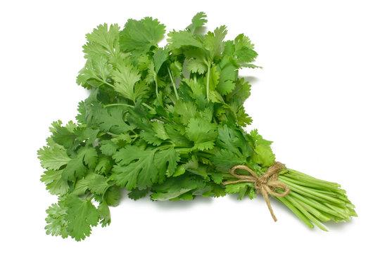 coriander - cilantro