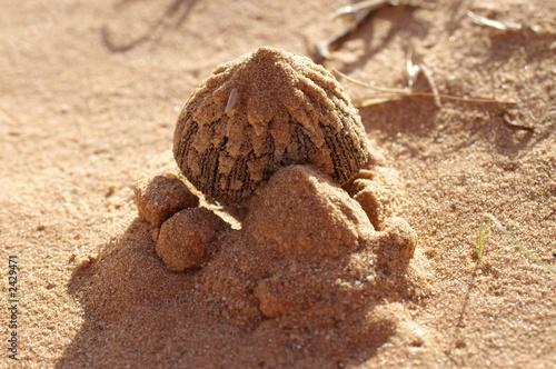 champignon sortant du sable photo libre de droits sur la banque d 39 images image. Black Bedroom Furniture Sets. Home Design Ideas
