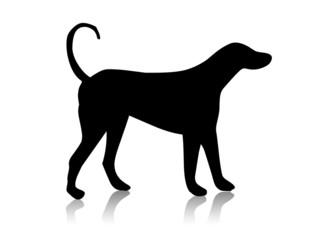 animal black shape