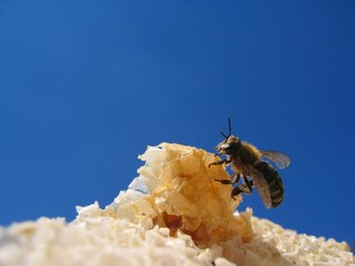 ''bee lunch 14''