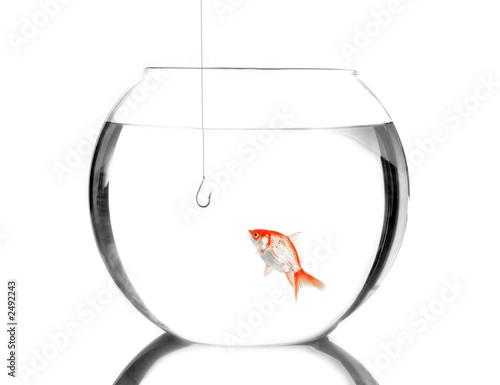 Pi ge hame on dans un bocal poisson photo libre de for Acheter bocal a poisson
