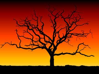 arbre detoure coucher de soleil