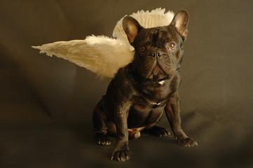 ange des chien et chiot