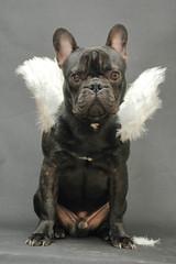 chien de face avec ailes d'ange