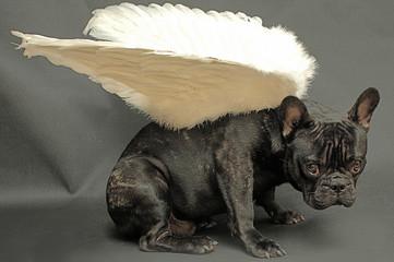 chien aux ailes d'ange
