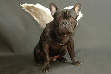 chien cupidon