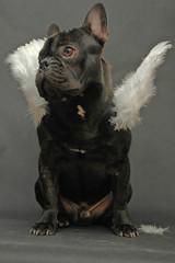 chien angélique