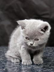 kitten26