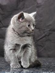 kitten08